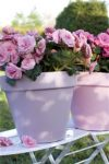 Frisse kleuren, zomers gevoel met gekleurde bloempotten