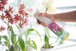 Het geheim van een mooi en lang bloeiende orchidee