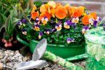 Februari: zet de bloemetjes buiten